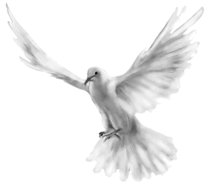 tube colombe