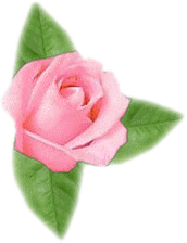 rose 1  pour morphing