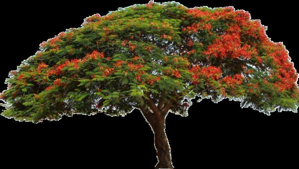 tube arbre