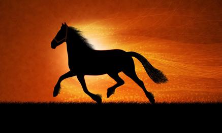 fond cheval fondu