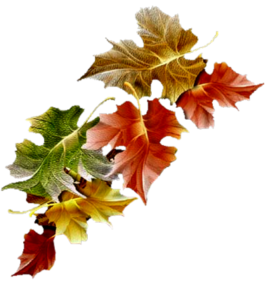 tube feuilles