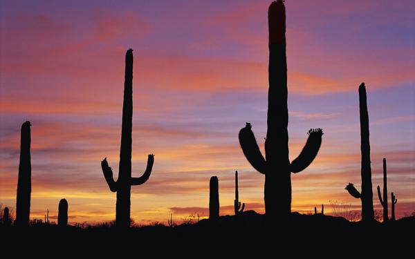 tube paysage cactus
