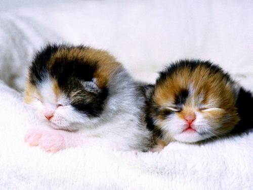 tube chatons