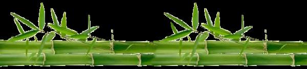 tube bambou